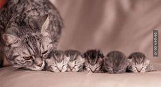 30 Foto Keluarga Baru Kucing yang Bisa Membuat Moodmu Jadi Bagus!