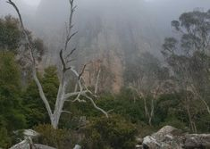 Walk along the base of the towering Organ Pipes. Cloud rolled in on this occasion making for some moody photos on one of our Iconic Ascent tours from Hobart to the top of kunanyi / Mt Wellington. Sea Level, Tasmania, Walk On, Pipes, Things To Do, Base, Tours, Photos, Pictures