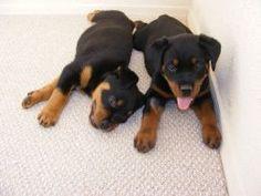 Puppy potty training secrets revealed