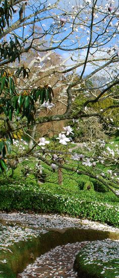 Catch a falling petal at Glendurgan - one of our '50 things to do before you're 11¾'