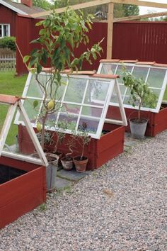 Greenhouse garden boxes!