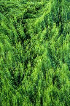 Doug's Photo Blog: Accent in Green