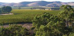 Exploring Australia Introducing the Barossa Valley Wine Region | Australia Tours | Collette Vacations
