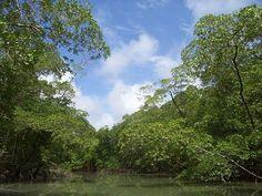 Der Amazonas - ein Hort der Heilung. Tausende unendeckte Heilpflanzen warten auf uns, aber die Pharmakonzerne halten das Wissen zurück. Warum wohl? :-)