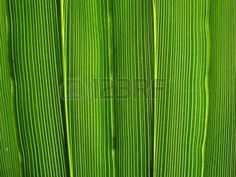 Vibrant green leaf lines macro natural abstract background. photo