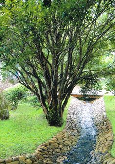 I haven't seen the idea previously. Home Landscaping Ideas Drainage Ditch, Yard Drainage, Outdoor Landscaping, Outdoor Gardens, Landscaping Ideas, Acreage Landscaping, Walkway Ideas, Pond Design, Landscape Design