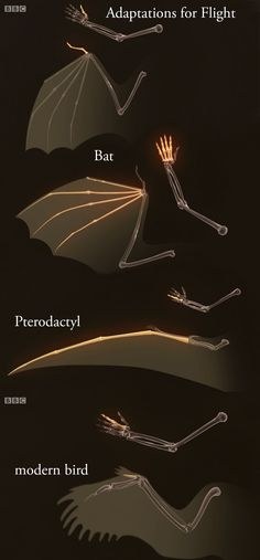 """Adaptations for Flight 