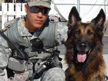 Military Working Dogs