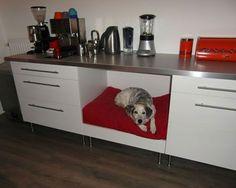 Det finns många roliga och kreativa sätt att bygga möbler till din hund eller katt. Här 12 exempel.