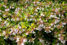 Discover five scented plants for July, including gorgeous flowering shrubs and plants for evening scents, with expert advice from BBC Gardeners' World Magazine.