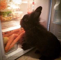 Bunny raids the fridge for a snack - September 6, 2016
