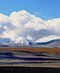 Antofagasta de la Sierra, Provincia de Catamarca, Laguna Blanca ....ARGENTINA  www.ruta40.com.ar
