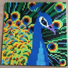 Peacock hama beads by sandramhamre