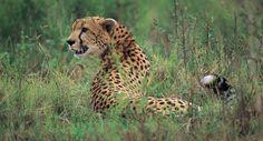 Need a break ? Join us on a wildlife safari in Africa ! >> safari holidays --> http://createasafari.com