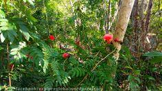 #cuba #vinales #jungle #selva #forest #flowers #flores #blumen #garten #garden #jardin #kuba