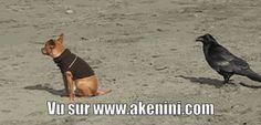 Akenini.com - Mini animations drôles - Funny gif animated