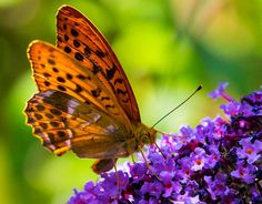 schmetterling - Google-Suche Photographs, Board, Google, Nature, Search, Photos, Photograph, Sign, The Great Outdoors
