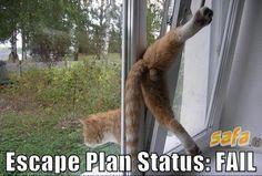 Poor kitty haha.