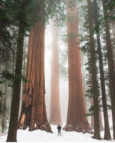 """8,122 Likes, 56 Comments - Wilderness Culture (@wilderness_culture) on Instagram: """"Sequoia National Park, located in the southern Sierra Nevada in #California. The Giant Sequoias are…"""""""