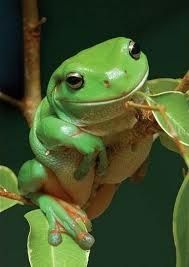 **Strange frogs :)