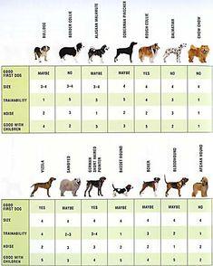 Razas de perro   Posts and Search