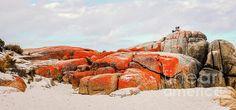 Nature Rocks Series by Lexa Harpell. Orange Lichen at Bay of Fires, Tasmania.