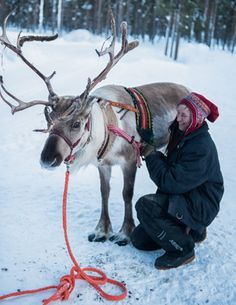 Harnessing the reindeer