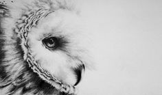 View David Filer's collection of wildlife artwork produced in graphite pencil and drawn in a super-realist manner. This is wildlife art at its best! Pencil Drawings Of Girls, Pencil Drawings Of Animals, Realistic Pencil Drawings, Ink Drawings, Organic Art, Photo D Art, Black And White Drawing, International Artist, Wildlife Art