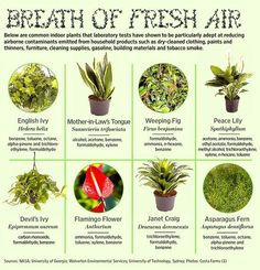 List of indoor plants that improve air quality.  Breathe pure air while you sleep.