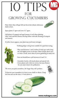 Raised Garden 10 Tips for Growing Cucumbers - A Healthy Life For Me.Raised Garden 10 Tips for Growing Cucumbers - A Healthy Life For Me Veg Garden, Fruit Garden, Edible Garden, Lawn And Garden, Vegetable Gardening, Garden Soil, Fence Garden, Veggie Gardens, Strawberry Garden