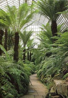 It is said that by the late Georgian years, everyone in England was becoming excited about the science of exotic plants: collecting, studyin. Tropical Landscaping, Tropical Garden, Backyard Landscaping, Eden Day Spa, Beautiful Landscapes, Beautiful Gardens, Tree Fern, Victorian Gardens, Greenhouse Gardening