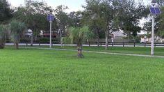 SockaZone FL: San Antonio En La MLS