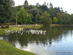 Felipe, o pequeno viajante: São Francisco de Paula, o Lago São Bernardo e a Livraria Miragem - uma ótima base para roteiros pela Serra Gaúcha (com dicas de hospedagem)