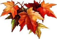осенние листья1.png