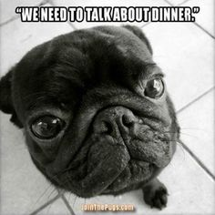 """🍲 """"Our food situation is unacceptable!"""" 🍲 ・・・ www.jointhepugs.com"""