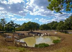 Visit to the Stud Farm - an experience you should not miss - Lipica
