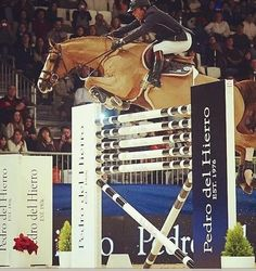 giving his horse full use of his head over this huge jump  look how tight those front legs are tucked...