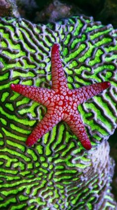 Marble Starfish                                                                                                                                                                                 More