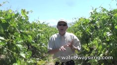 Grape Vineyard Drip Irrigation Experts in Bakersfield and Delano, Ca