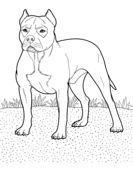 Pitbull coloring page