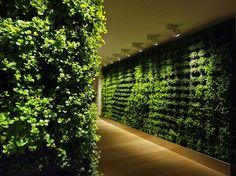 Go green. Indoor plant walls