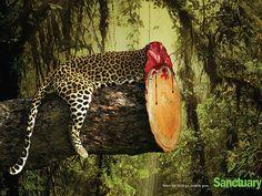 Campaña contra la desforestación mostrada burtalmente