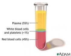 functions of blood explained in detail and the explanation of the functions of the four main components of blood (plasma, red blood cells (erythrocytes), white blood cells (leukocytes) and platelets (thrombocytes) can be read in this article. Platelet Rich Plasma Therapy, Blood Components, Medical Laboratory Science, Science Biology, Stem Cell Therapy, White Blood Cells, Phlebotomy, Medical Technology, Nursing