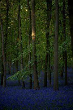 ✯ Buckinghamshire, England