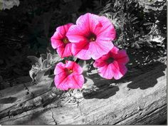 color splash photography - Google Search