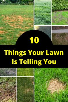 Did you know that the lawn is always trying to communicate with you?  We spoke to experts at TruGreen and according to them, there are several things that the lawn might be doing that tell you that things aren't too good. Here are 10 things your lawn is trying to say to you