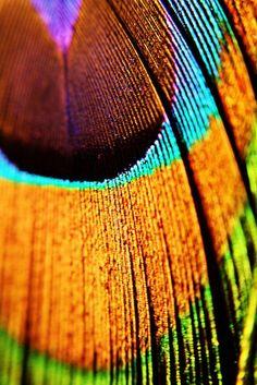 Feather macro #macro #feather #photography