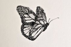 BUTTERFLY - By Nathan Ferlazzo