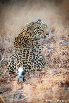 Looking Back by Andrew Schoeman on 500px