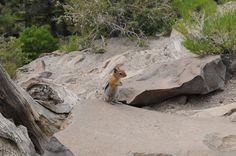 A Lodge Chipmunk at Rainbow Falls...Mammoth, CA